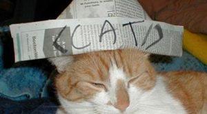 schema-funny-cat